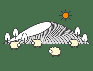 tonte des moutons laine naturelle